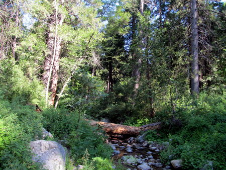 Strawberry Creek in Idyllwild, CA