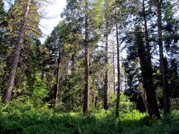 Idyllwild Park, California