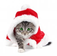 Merry Christmas cat in a Santa hat