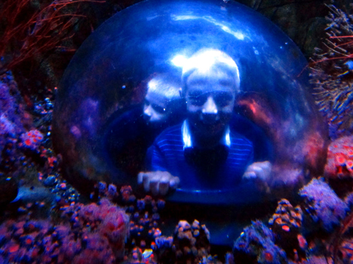 Wordpress photo challenge: two subjects - Legoland Sealife aquarium