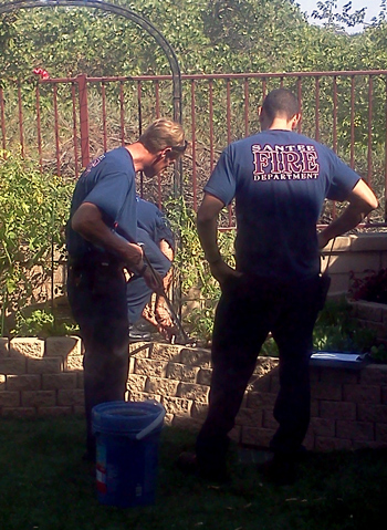 Firefighters remove a snake from our backyard