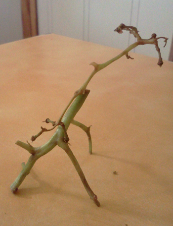 Food art: giraffe made with grape stems