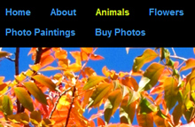Nature photography website