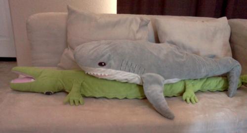 Shark biting croc