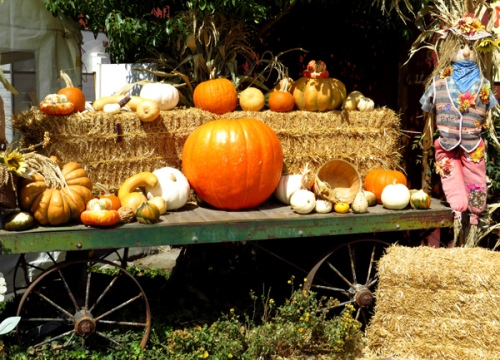 Fall decorations at the pumpkin patch