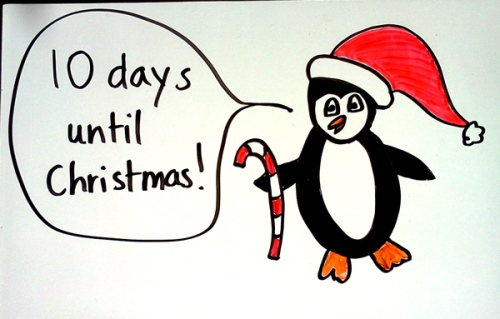 Penguin counts down to Christmas