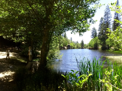 Pond and trees by Idyllwild California