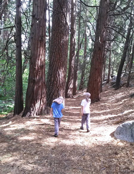 Walking in the woods in Idyllwild
